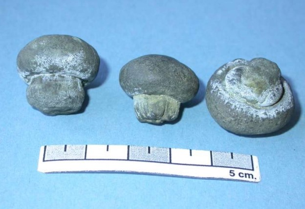 Image 1 - fossil mush